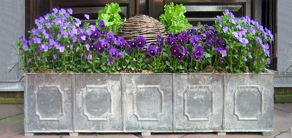 container gardening pansies