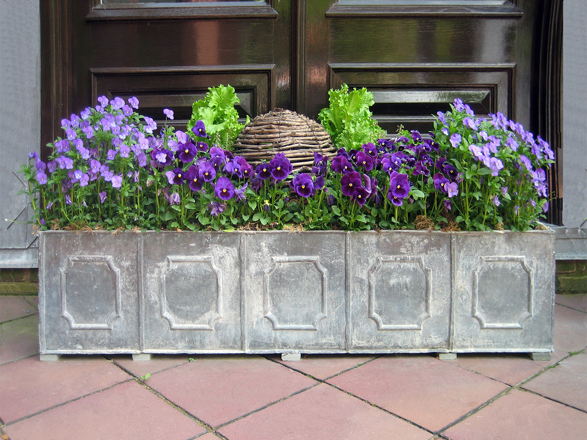 containers_pansy_trough