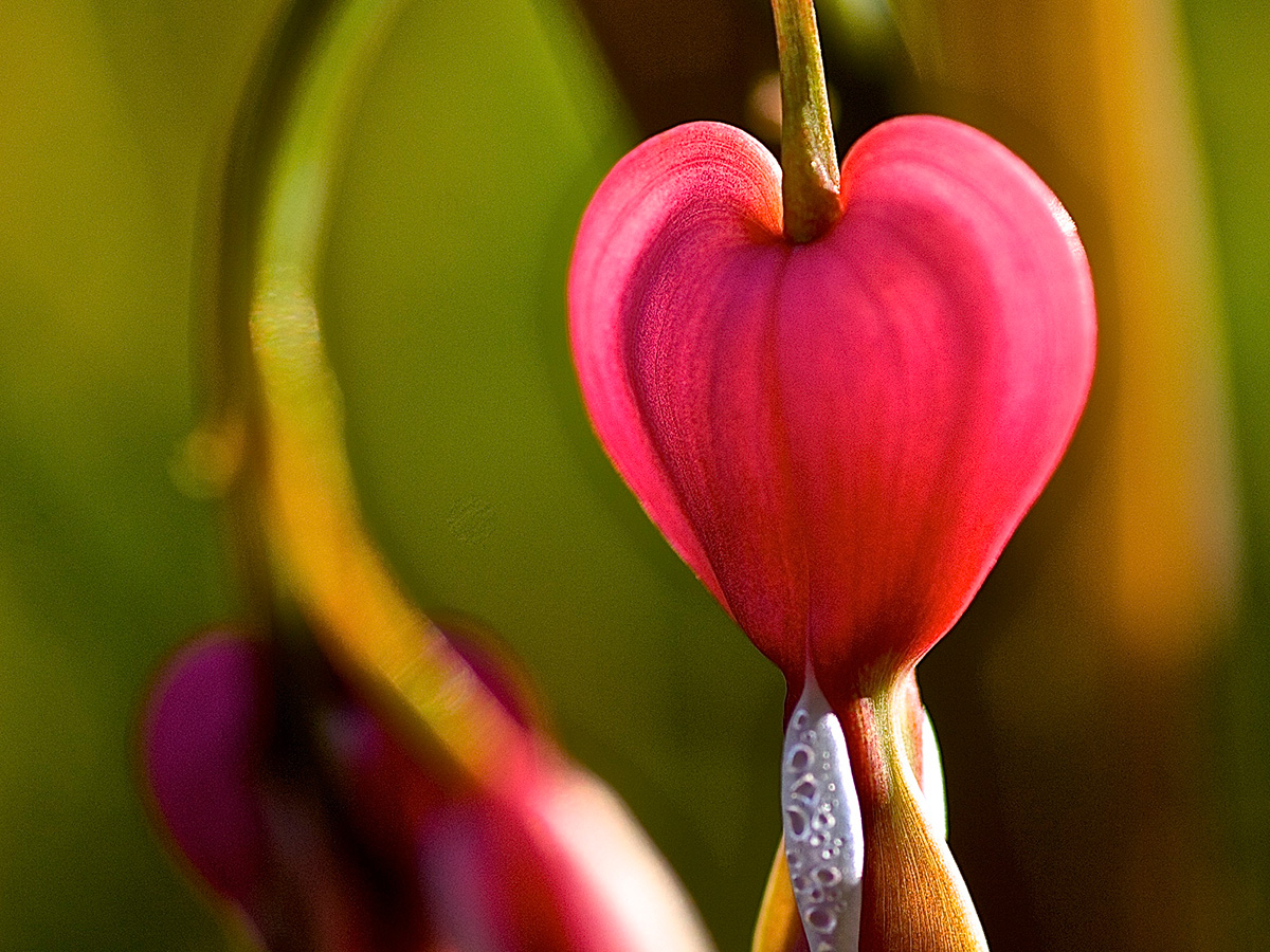 heart-shape_flower